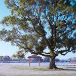 早朝の公園の木