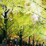 熊本県庁のイチョウ並木ライトアップをフィルムで
