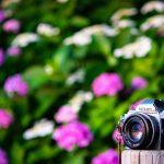 夕日と紫陽花とニコンFGに50mm/F1.8S