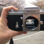 ニコンFで桜通りを撮る